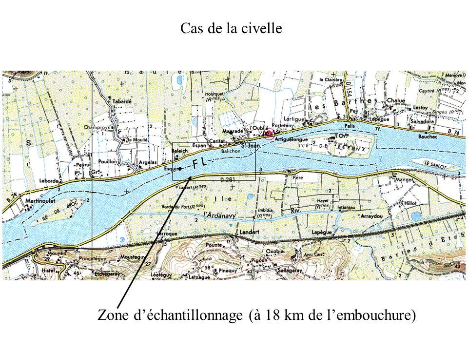 Cas de la civelle Zone déchantillonnage (à 18 km de lembouchure)