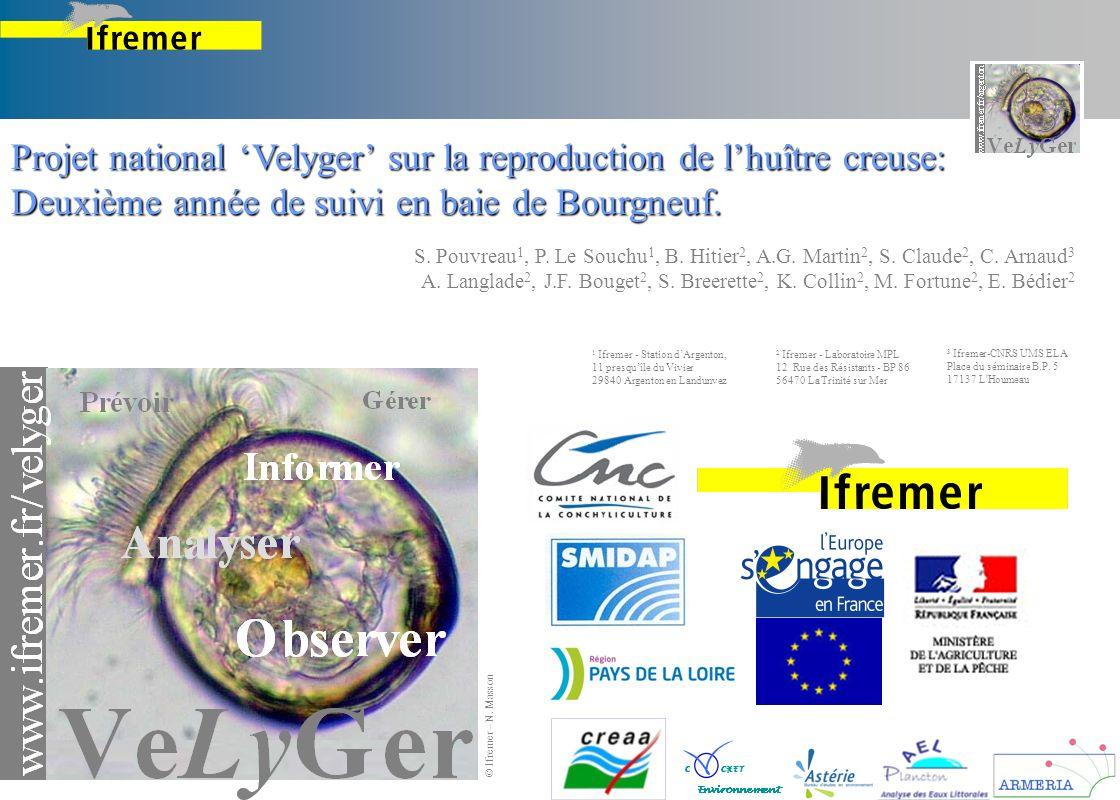 Projet national Velyger sur la reproduction de lhuître creuse: Deuxième année de suivi en baie de Bourgneuf. © Ifremer – N. Masson S. Pouvreau 1, P. L