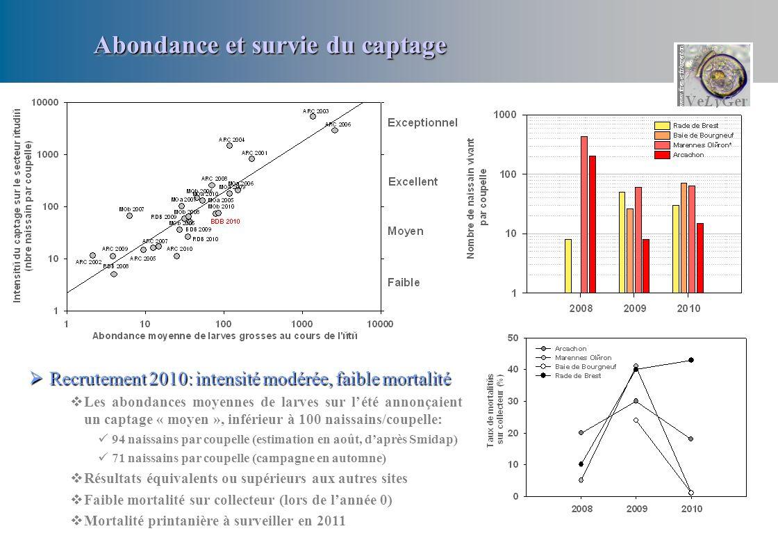 Abondance et survie du captage Recrutement 2010: intensité modérée, faible mortalité Recrutement 2010: intensité modérée, faible mortalité Les abondan