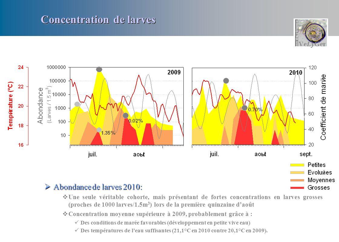 Abondance de larves 2010: Abondance de larves 2010: Une seule véritable cohorte, mais présentant de fortes concentrations en larves grosses (proches d