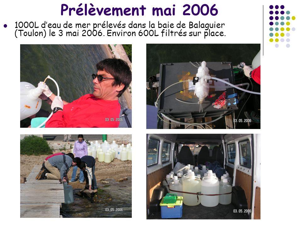 Prélèvement mai 2006 1000L deau de mer prélevés dans la baie de Balaguier (Toulon) le 3 mai 2006. Environ 600L filtrés sur place.