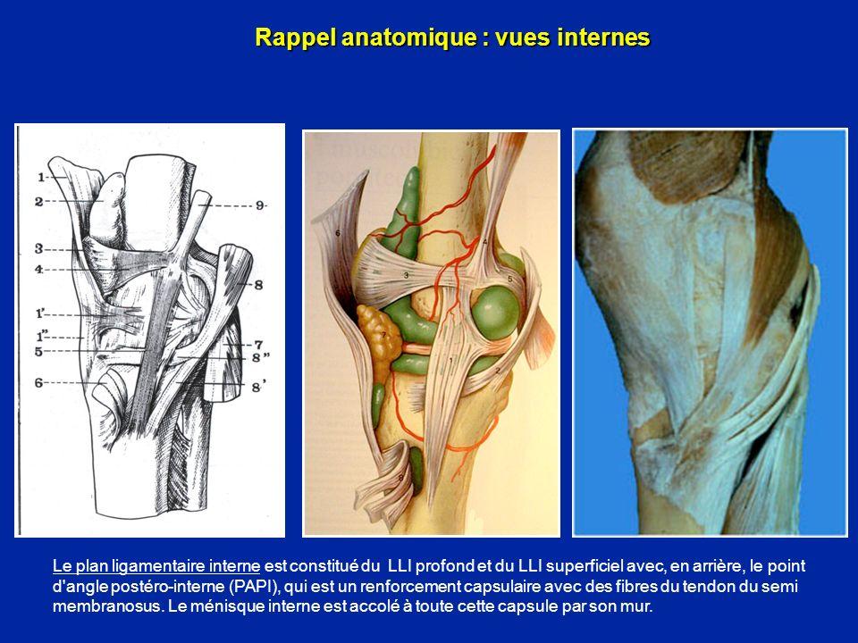 Les tendons de la patte doie Stabilisateurs du genou en extension, ils sont rotateurs internes en flexion