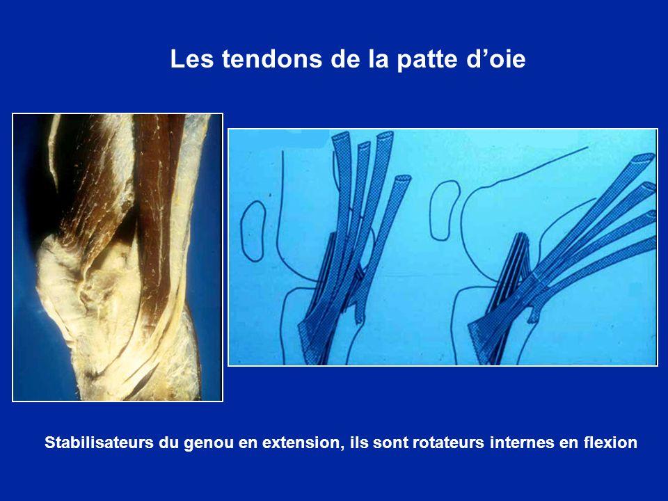 Rappel anatomique : vue externe Le plan ligamentaire externe est constitué par le LLE, qui va du condyle externe à la tête du péroné.