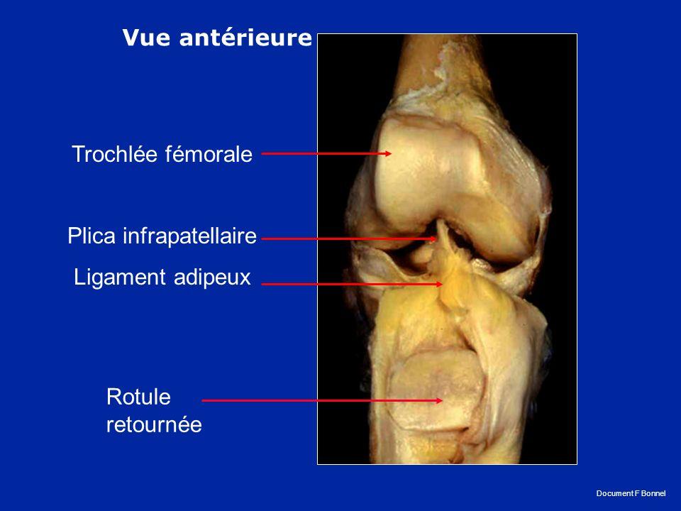 Vue antérieure des ligaments croisés Vue postérieure des ligaments croisés LCA LCP LCA LCP Le ligament croisé antérieur s insère sur la face interne du condyle externe et sur la surface pré spinale du tibia.