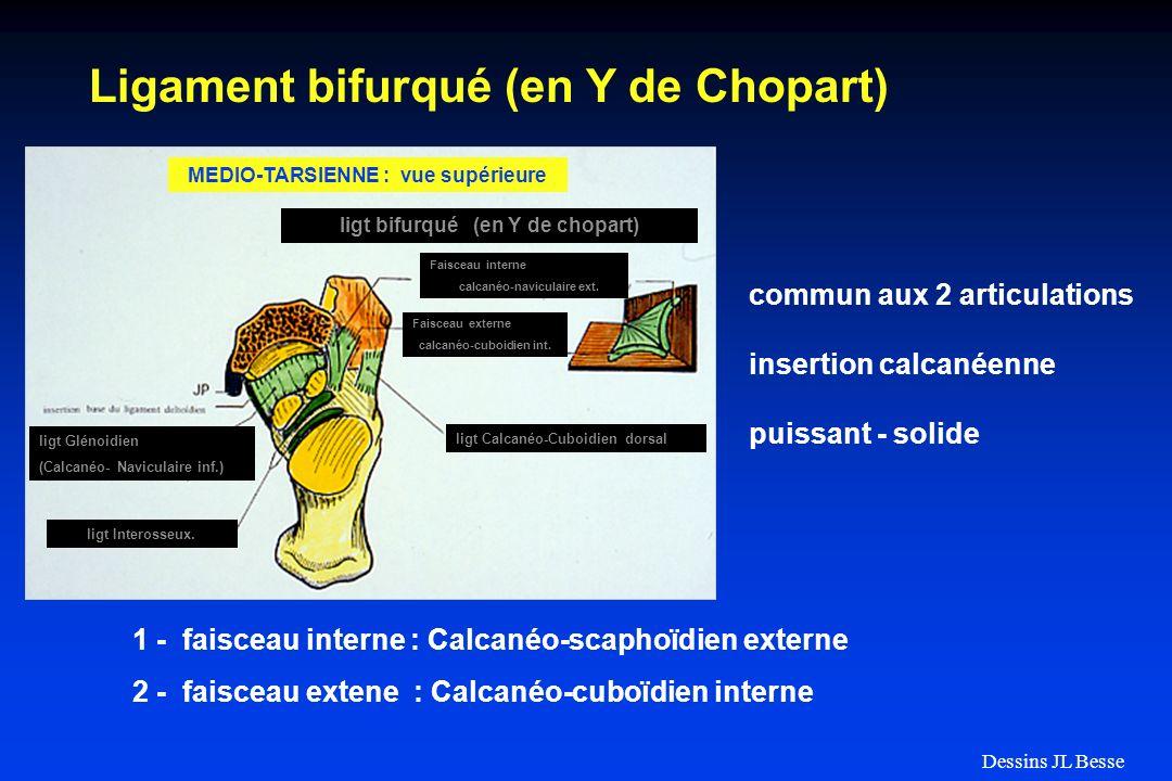 Ligament bifurqué (en Y de Chopart) Faisceau interne calcanéo-naviculaire ext. ligt Calcanéo-Cuboidien dorsal ligt bifurqué (en Y de chopart) ligt Glé