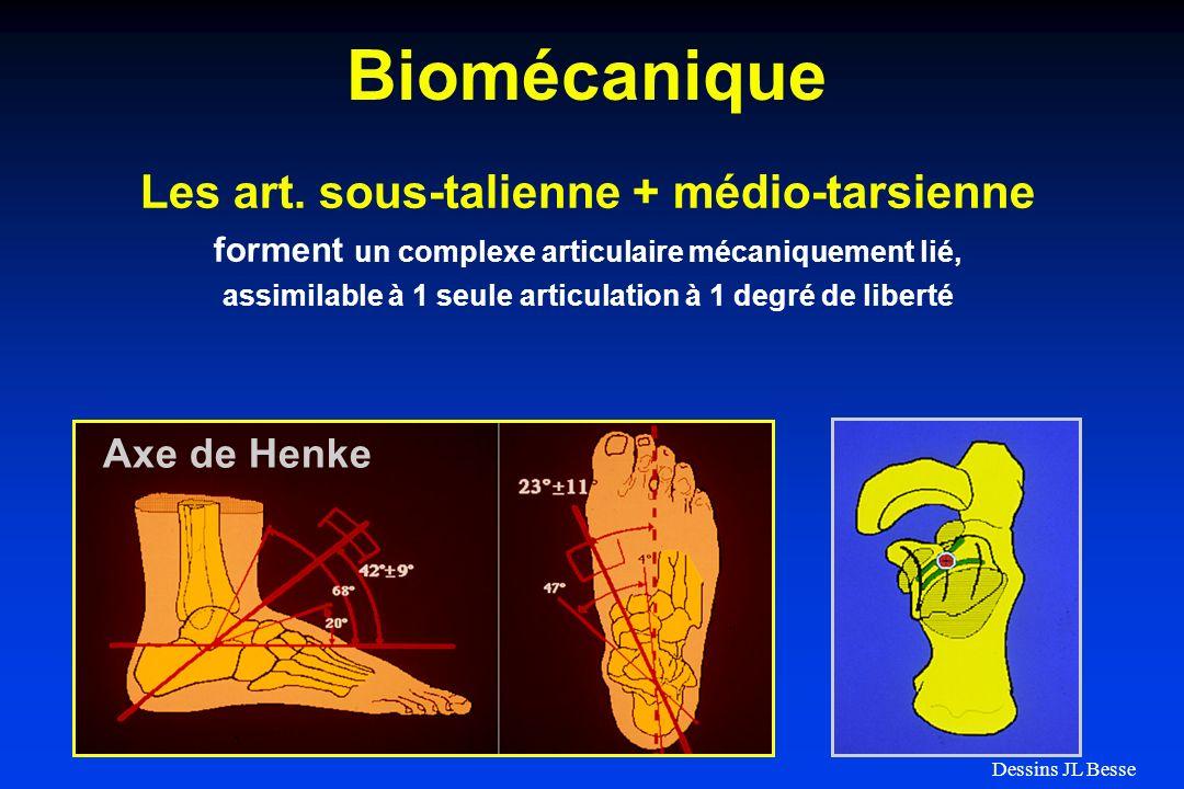 Biomécanique Les art. sous-talienne + médio-tarsienne forment un complexe articulaire mécaniquement lié, assimilable à 1 seule articulation à 1 degré