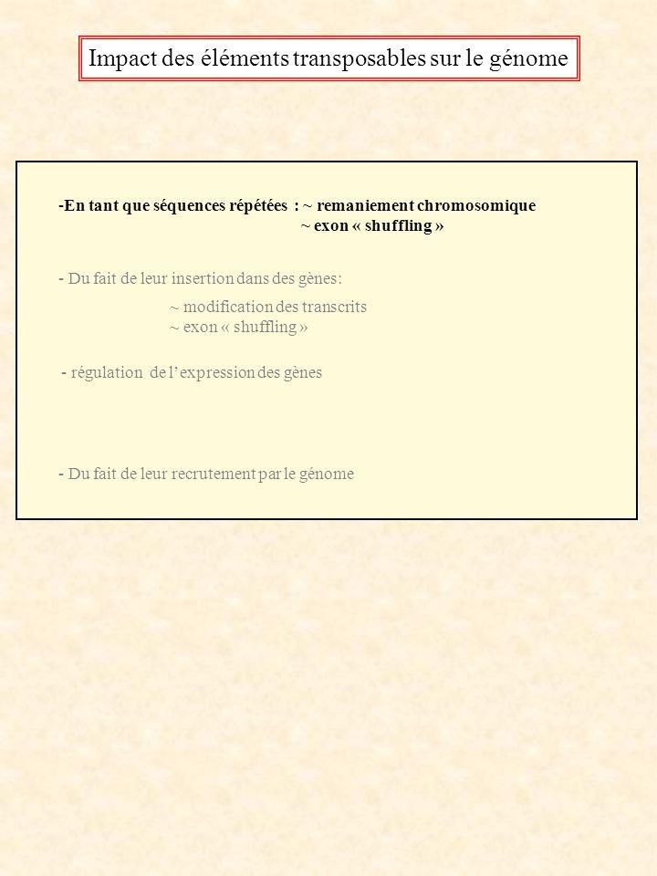 Impact des éléments transposables sur le génome -En tant que séquences répétées : ~ remaniement chromosomique ~ exon « shuffling » - Du fait de leur i