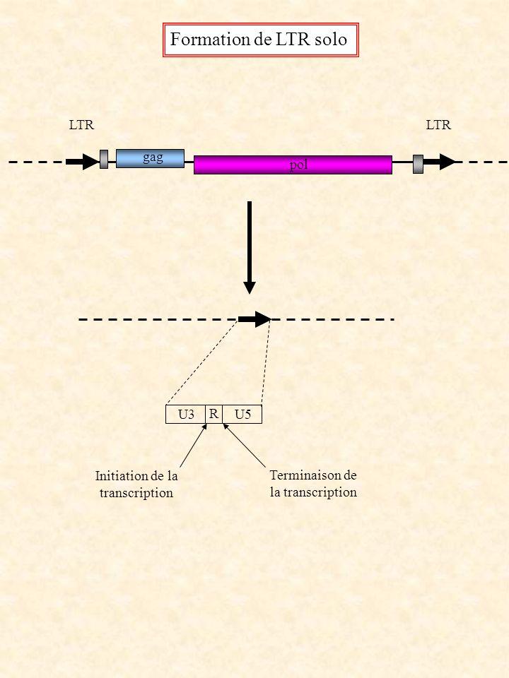 LTR gag pol Formation de LTR solo U3 R U5 Initiation de la transcription Terminaison de la transcription
