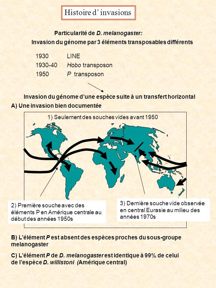 Histoire d invasions 1930 1930-40 1950 LINE Hobo transposon P transposon Particularité de D. melanogaster: Invasion du génome par 3 éléments transposa