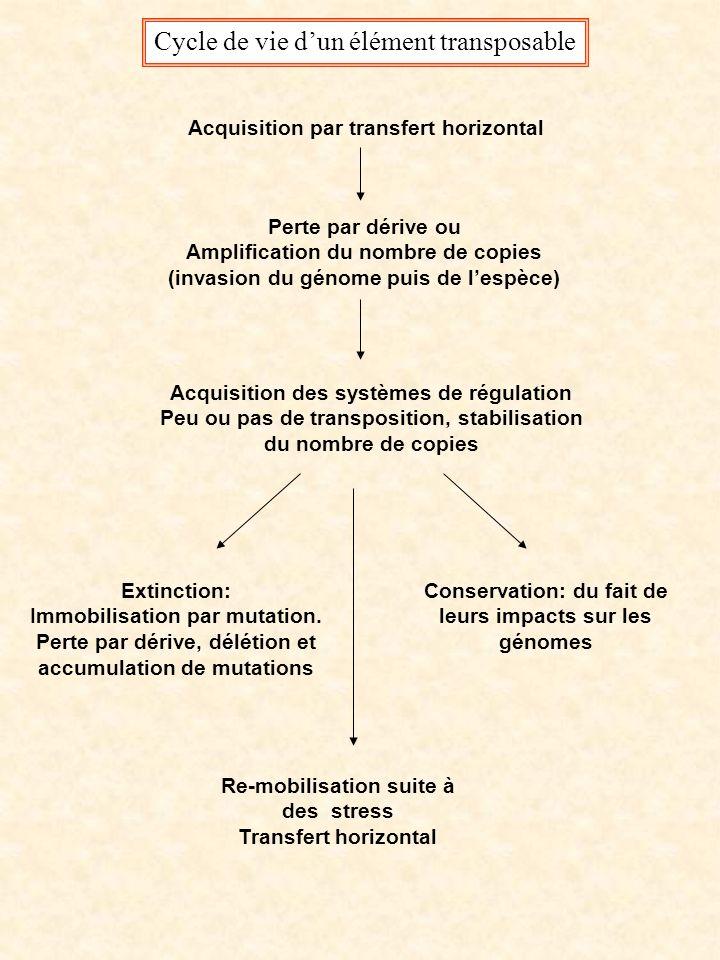 Cycle de vie dun élément transposable Acquisition par transfert horizontal Perte par dérive ou Amplification du nombre de copies (invasion du génome puis de lespèce) Acquisition des systèmes de régulation Peu ou pas de transposition, stabilisation du nombre de copies Extinction: Immobilisation par mutation.