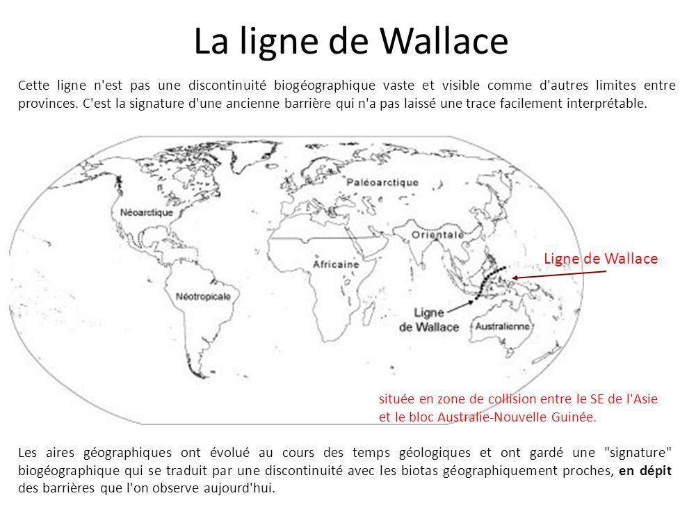 La ligne de Wallace Cette ligne n'est pas une discontinuité biogéographique vaste et visible comme d'autres limites entre provinces. C'est la signatur