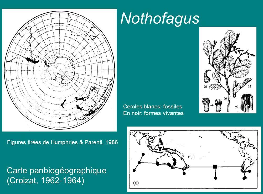 Nothofagus Carte panbiogéographique (Croizat, 1962-1964) Cercles blancs: fossiles En noir: formes vivantes Figures tirées de Humphries & Parenti, 1986