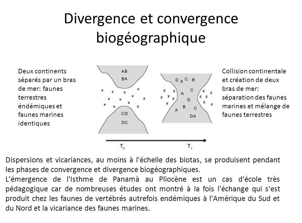 Divergence et convergence biogéographique Deux continents séparés par un bras de mer: faunes terrestres éndémiques et faunes marines identiques Collis