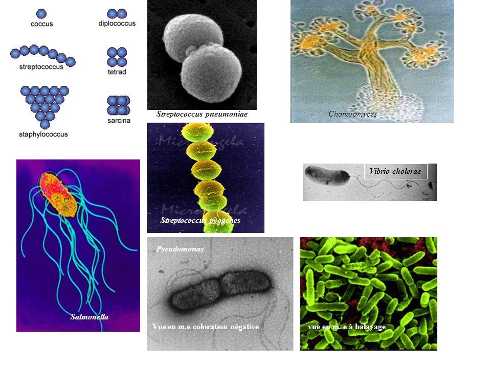 Streptococcus pneumoniae Vibrio cholerae Streptococcus pyogenes Salmonella Pseudomonas Vue en m.e coloration négative vue en m. e à balayage Chondromy