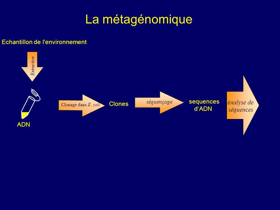 ADN Extraction séquençage Clonage dans E. coli Clones sequences dADN Analyse de séquences Extraction Echantillon de l'environnement La métagénomique