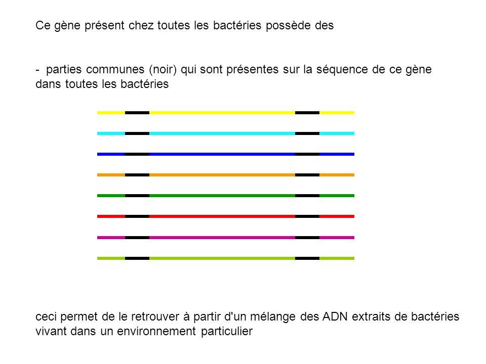 Ce gène présent chez toutes les bactéries possède des - parties communes (noir) qui sont présentes sur la séquence de ce gène dans toutes les bactérie