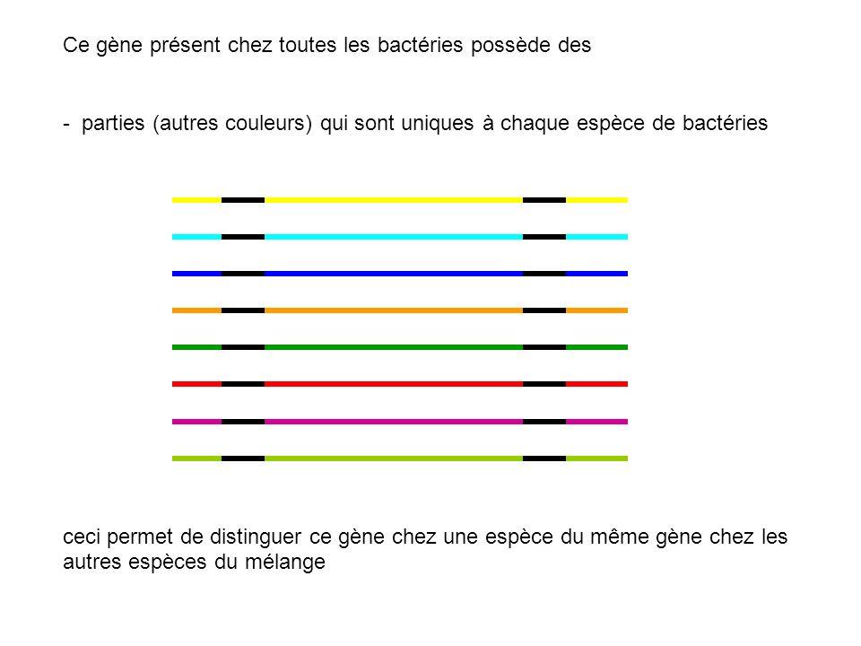 Ce gène présent chez toutes les bactéries possède des - parties (autres couleurs) qui sont uniques à chaque espèce de bactéries ceci permet de disting