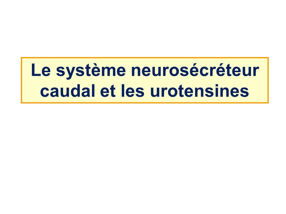 Le système neurosécréteur caudal et les urotensines