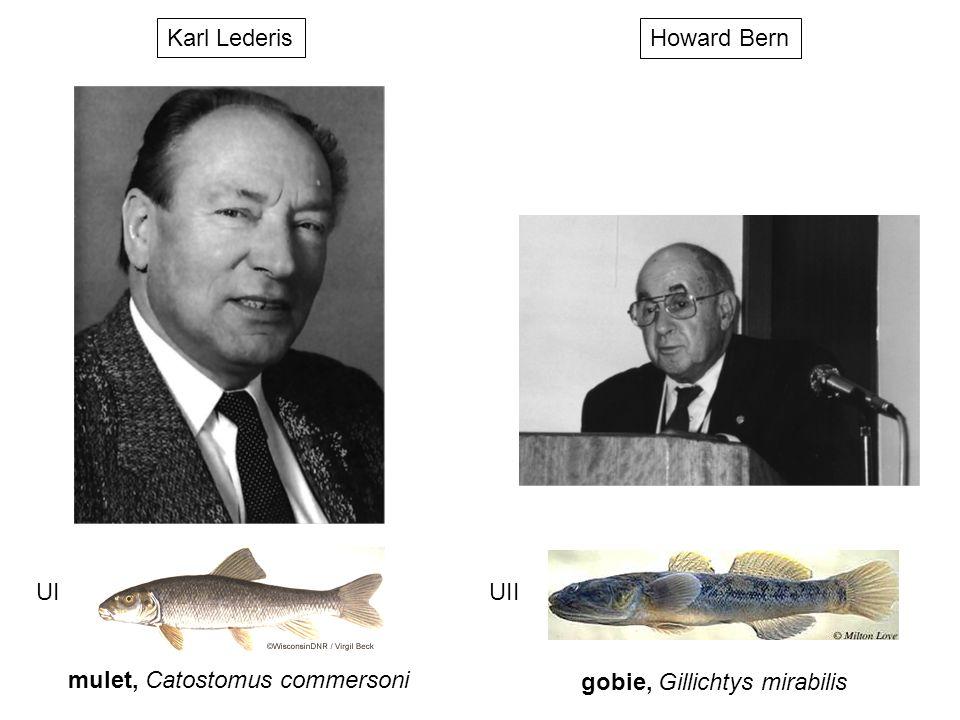 Howard Bern gobie, Gillichtys mirabilis UII Karl Lederis mulet, Catostomus commersoni UI
