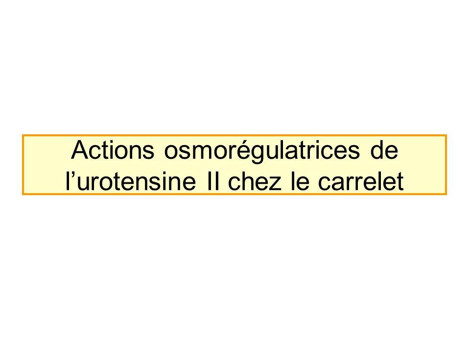 Actions osmorégulatrices de lurotensine II chez le carrelet