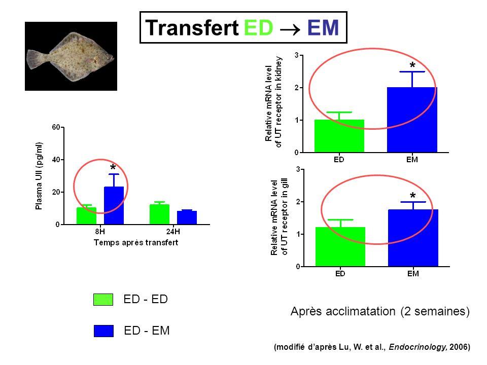 ED - ED ED - EM Après acclimatation (2 semaines) * * * (modifié daprès Lu, W. et al., Endocrinology, 2006) Transfert ED EM