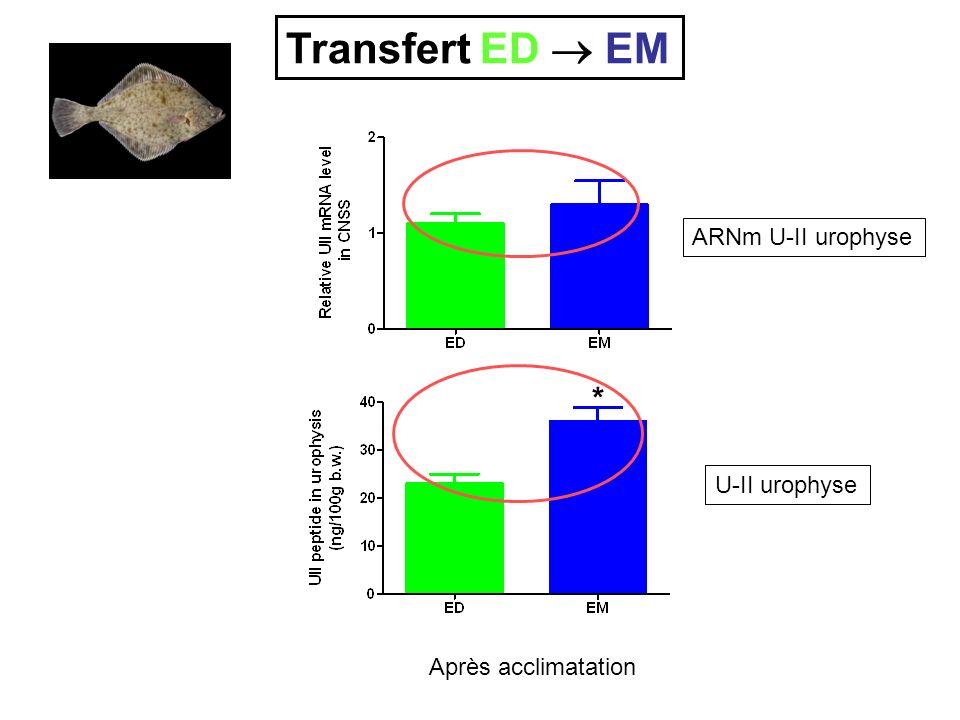 ARNm U-II urophyse U-II urophyse Après acclimatation * Transfert ED EM