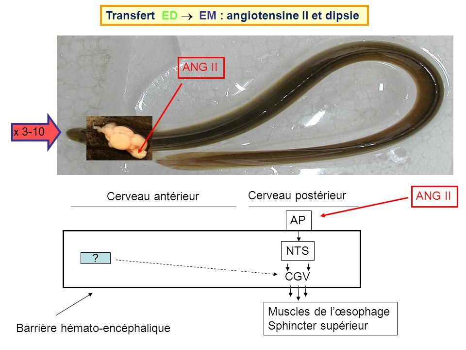 ANG II X 3-10 Transfert ED EM : angiotensine II et dipsie AP Barrière hémato-encéphalique ? NTS CGV Muscles de lœsophage Sphincter supérieur Cerveau a