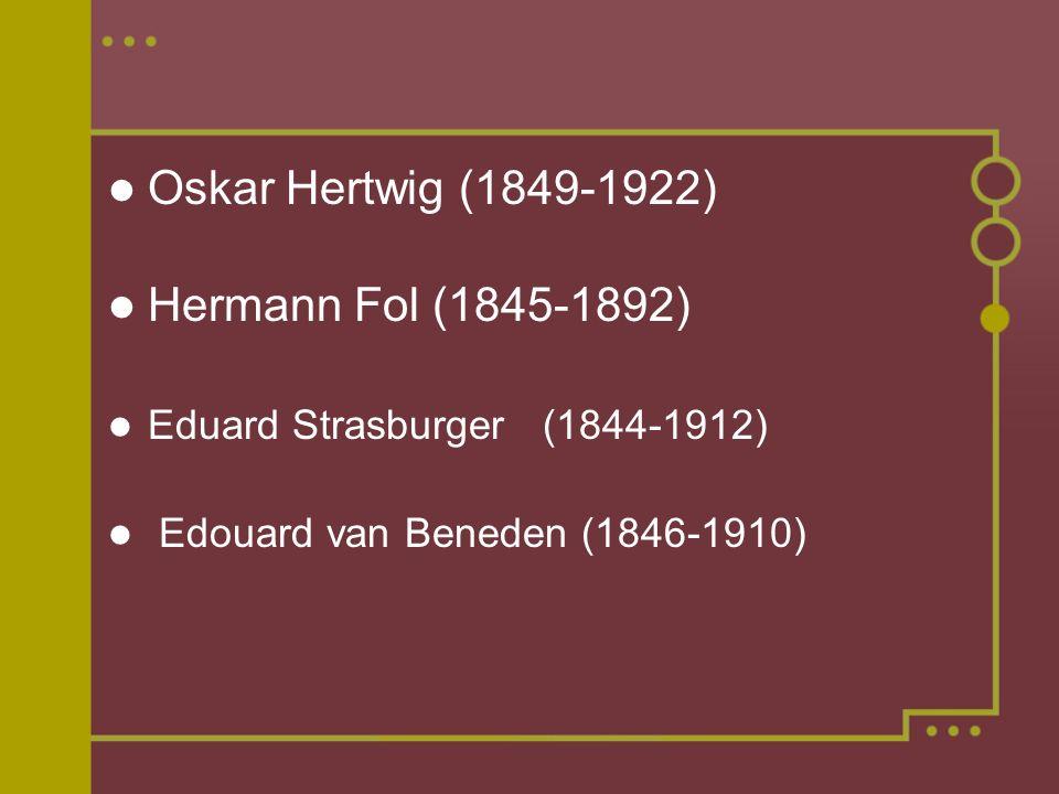 Oskar Hertwig (1849-1922) Hermann Fol (1845-1892) Eduard Strasburger (1844-1912) Edouard van Beneden (1846-1910)