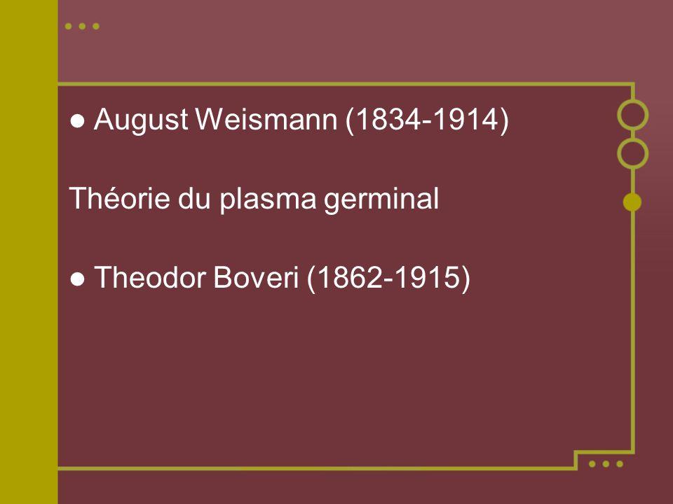 August Weismann (1834-1914) Théorie du plasma germinal Theodor Boveri (1862-1915)