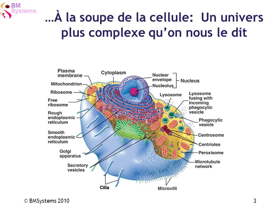Systems BM © BMSystems 20103 …À la soupe de la cellule: Un univers plus complexe quon nous le dit