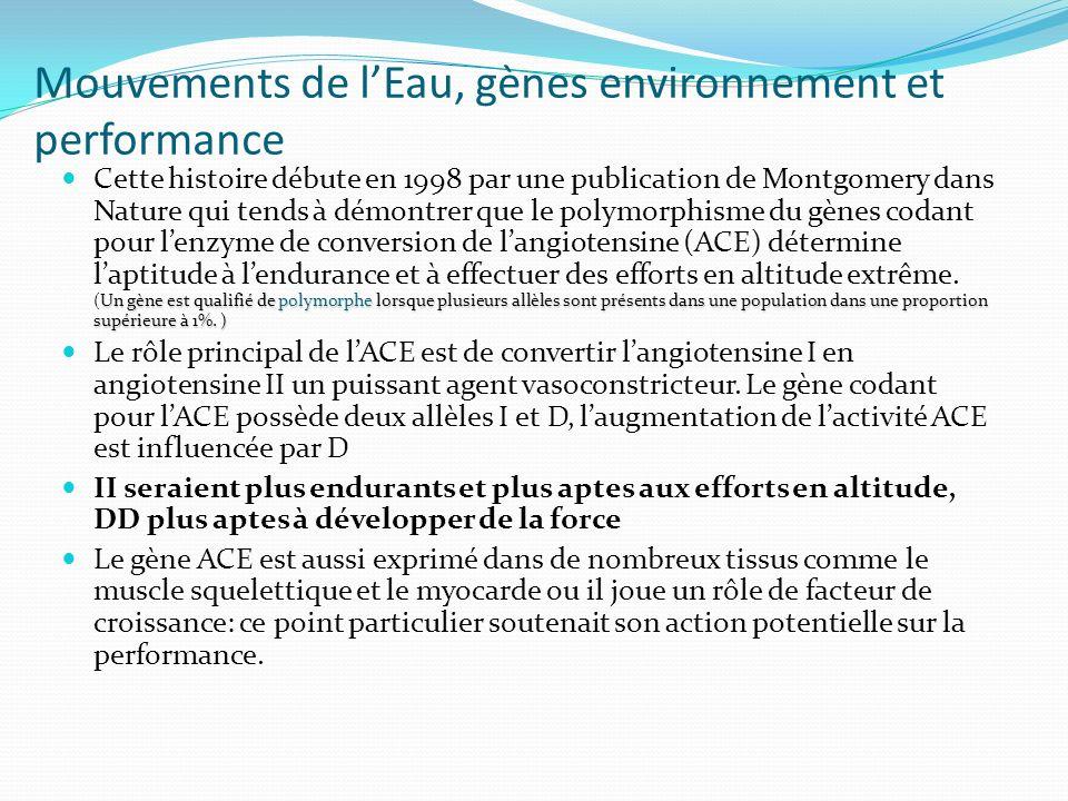 Mouvements de lEau, gènes environnement et performance Un gène est qualifié de polymorphe lorsque plusieurs allèles sont présents dans une population