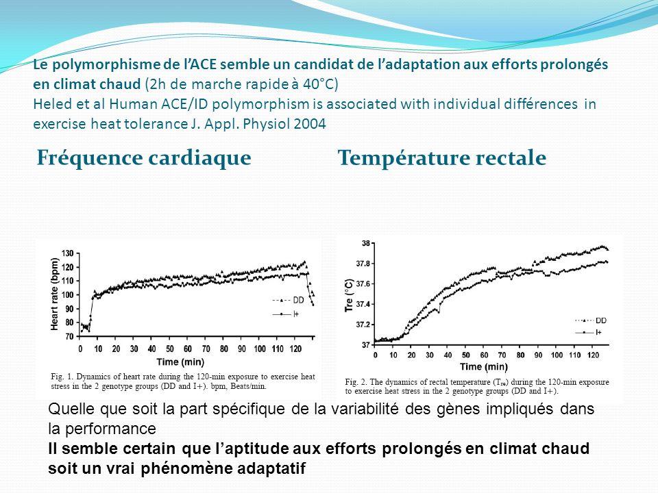 Le polymorphisme de lACE semble un candidat de ladaptation aux efforts prolongés en climat chaud (2h de marche rapide à 40°C) Heled et al Human ACE/ID