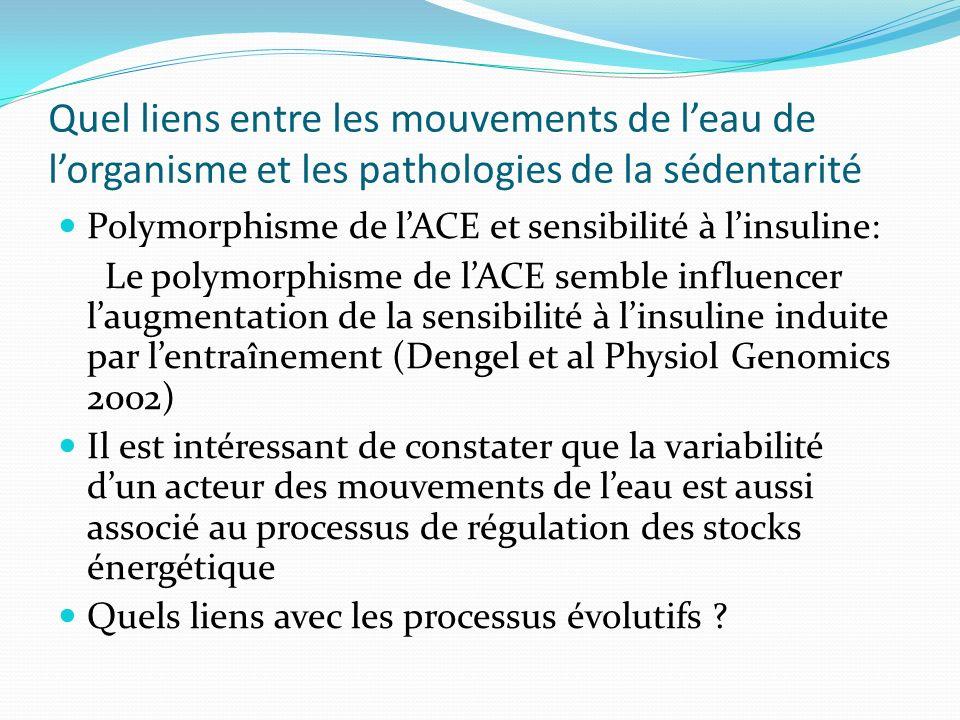 Quel liens entre les mouvements de leau de lorganisme et les pathologies de la sédentarité Polymorphisme de lACE et sensibilité à linsuline: Le polymo