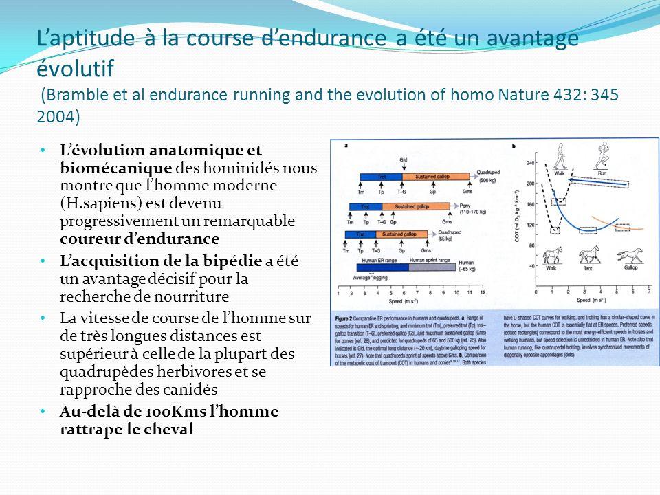 Laptitude à la course dendurance a été un avantage évolutif (Bramble et al endurance running and the evolution of homo Nature 432: 345 2004) Lévolutio