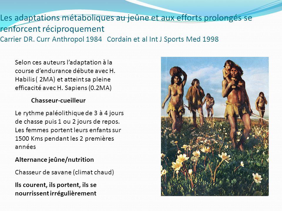 Les adaptations métaboliques au jeûne et aux efforts prolongés se renforcent réciproquement Carrier DR. Curr Anthropol 1984 Cordain et al Int J Sports