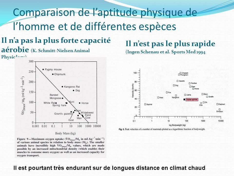 Comparaison de laptitude physique de lhomme et de différentes espèces Il na pas la plus forte capacité aérobie (K. Schmitt-Nielsen Animal Physiology)