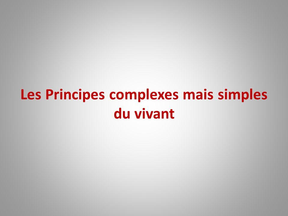 Les Principes complexes mais simples du vivant