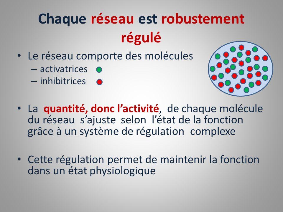Chaque réseau est robustement régulé Le réseau comporte des molécules – activatrices – inhibitrices La quantité, donc lactivité, de chaque molécule du