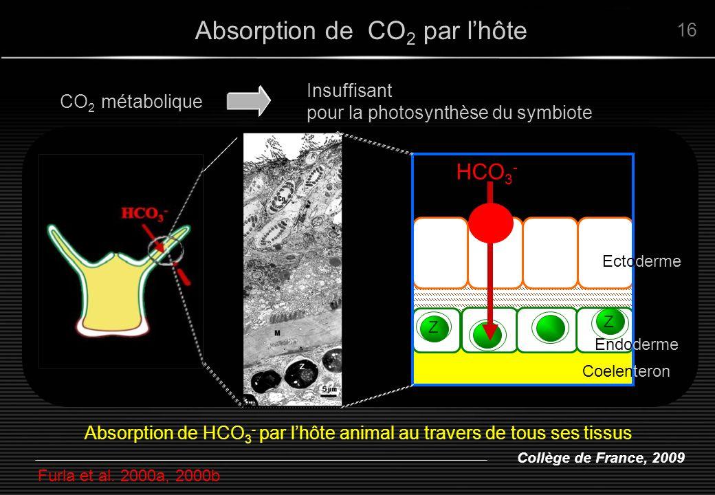 Collège de France, 2009 Absorption de CO 2 par lhôte Insuffisant pour la photosynthèse du symbiote CO 2 métabolique 16 Z Z HCO 3 - Ectoderme Endoderme