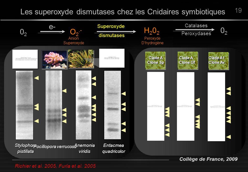 Collège de France, 2009 19 Richier et al. 2005, Furla et al. 2005 Les superoxyde dismutases chez les Cnidaires symbiotiques 0202 O 2.- H202H202 e- Sup