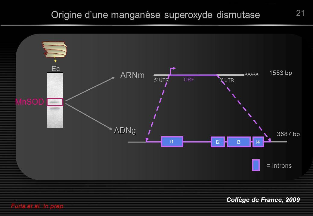 Collège de France, 2009 21 Ec Furla et al. In prep MnSOD ARNm AAAAA 1553 bp ORF 5 UTR3 UTR I1 I2I3I4 ADNg 3687 bp Origine dune manganèse superoxyde di