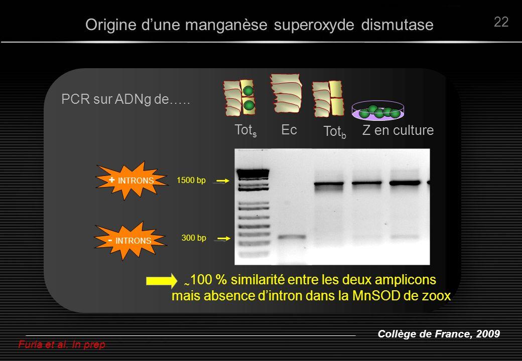 Collège de France, 2009 22 ~ 100 % similarité entre les deux amplicons mais absence dintron dans la MnSOD de zoox Ec 1500 bp + INTRONS PCR sur ADNg de