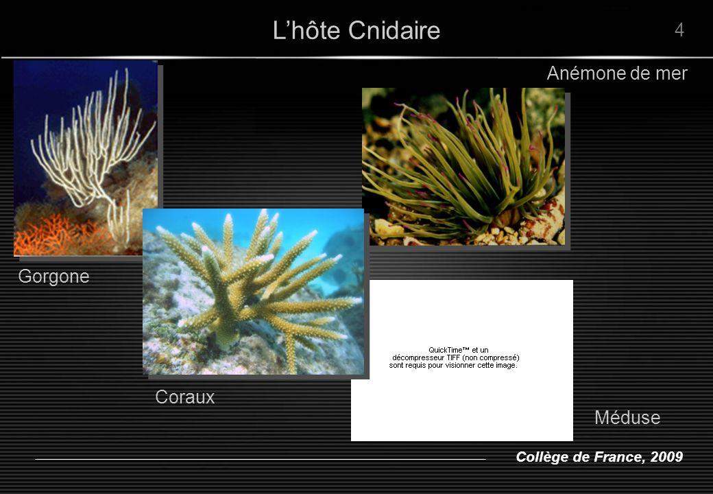 Collège de France, 2009 environs 3,10 6 symbiote / mg protéines = 1 million / cm 2 Z.
