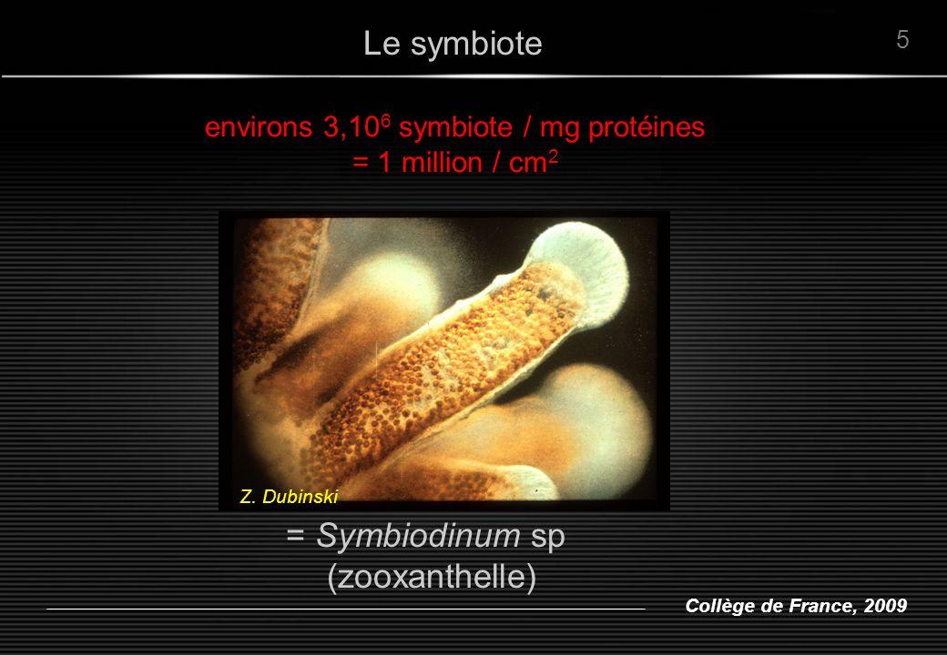 Collège de France, 2009 On considère que : Clade A, B --> eaux de surface Clade C --> eaux de profondeur --> sensible au stress thermique Clade D --> tolérant au stress thermique Diversité de zooxanthelles De Symbiodinium microadriaticum à … Pochon et al.