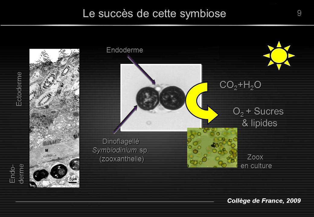 Collège de France, 2009 Endo-derme EctodermeEndodermeDinoflagellé Symbiodinium sp. (zooxanthelle) (zooxanthelle) Zoox en culture CO 2 +H 2 O O 2 + Suc