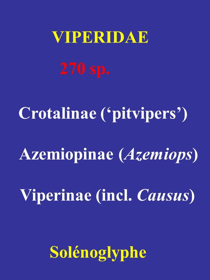Crotalinae (pitvipers) Azemiopinae (Azemiops) Viperinae (incl. Causus) VIPERIDAE 270 sp. Solénoglyphe