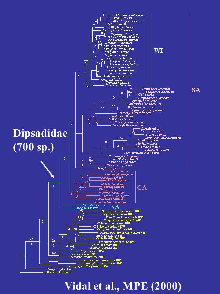 Aglyphe Opisthoglyphe => Termes inutiles