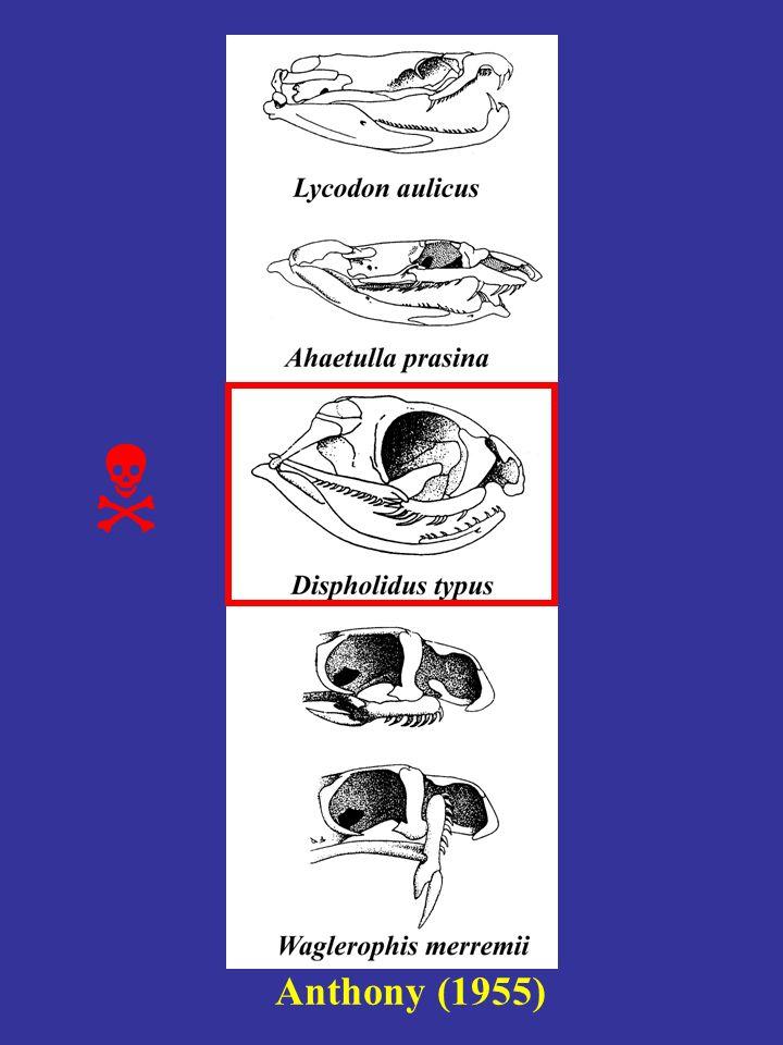 Crochets & dents maxillaires agrandies sont homologues Vonk et al.