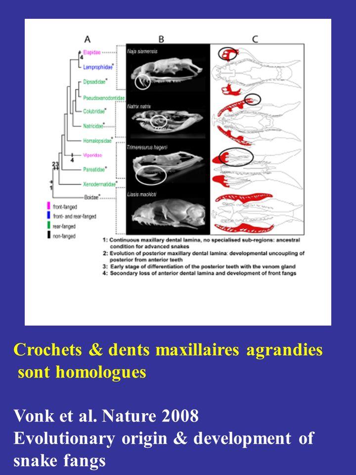 Glandes venimeuses Cellules séreuses Cellules muqueuses