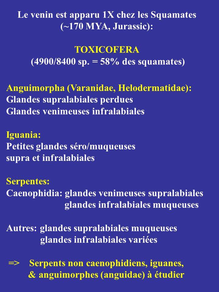 Anguimorpha (Varanidae, Helodermatidae): Glandes supralabiales perdues Glandes venimeuses infralabiales Iguania: Petites glandes séro/muqueuses supra